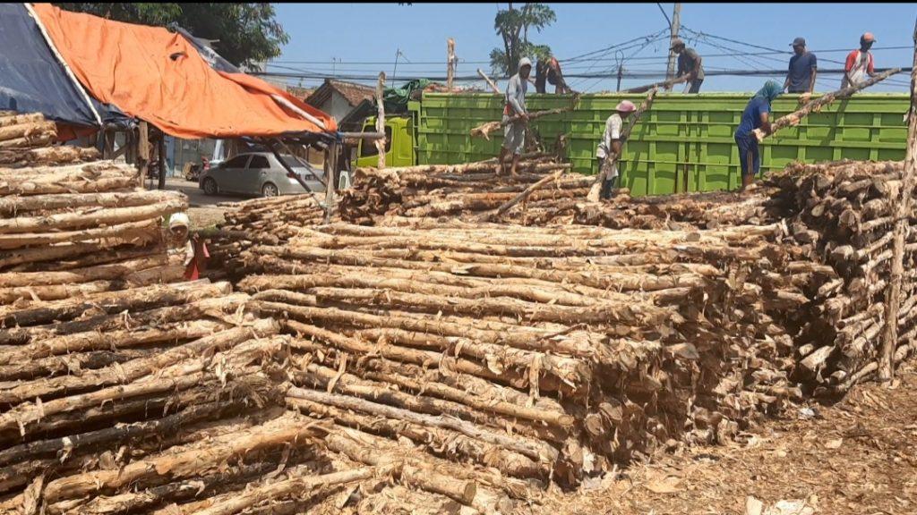 Jual Kayu Dolken Super Murah di Serang Banten, PD : Bintang Madura WA : 0852-2222-6189