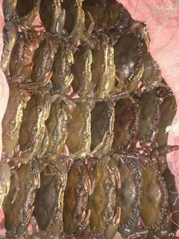 Jual Kepiting Soka Medan | Kuliner Medan Empuknya Kepiting Soka Bikin Meleleh di Lidah