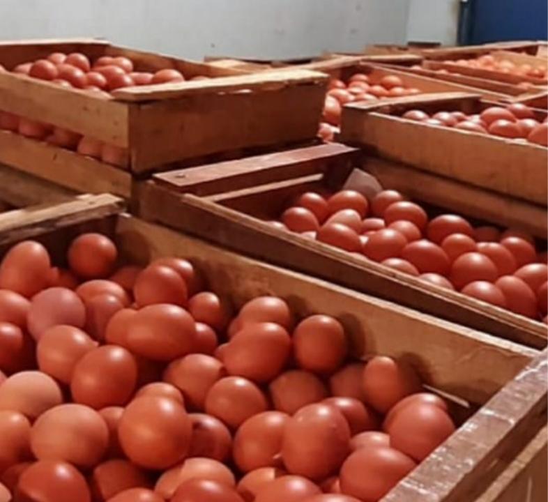 Supplier Telur Ayam berkualitas dan Bawang Merah Super